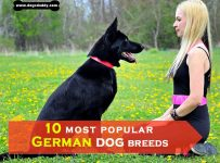 10 most popular German dog breeds